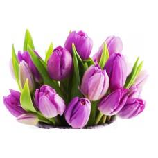 Тюльпан фиолетовый оптом