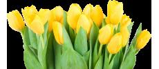 Купить тюльпаны оптом