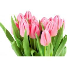 Тюльпан розовый оптом