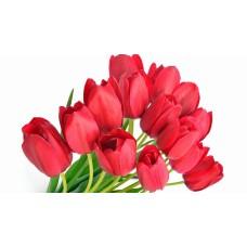 Тюльпан красный оптом