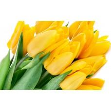 Тюльпан жёлтый оптом