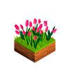 тюльпаны оптом Новомосковск