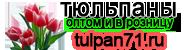 Купить тюльпаны оптом и в розницу - цены оптом ТЮЛЬПАН 71